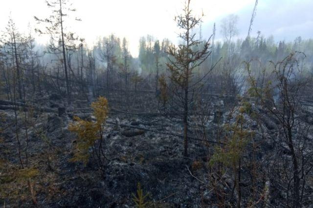 До населённых пунктов на южной границе пожара оставалось 3,7 км.