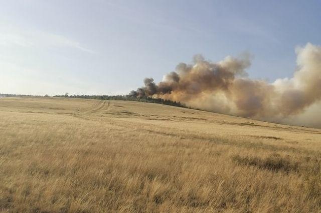 В прошлом году в Оренбуржье выгорело 58 221 дерево.