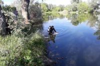 Водолазы Аварийно-спасательной службы Оренбургской области из озера Малахово достали тело утонувшего.
