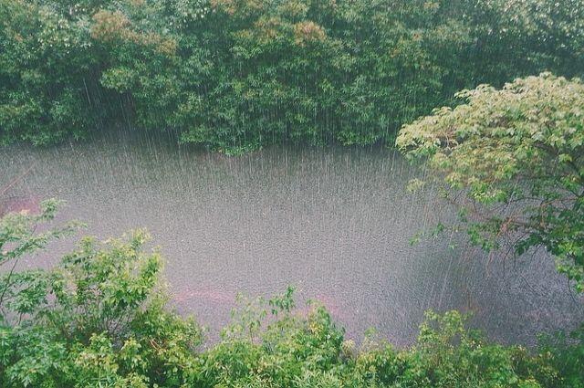 Сильнее всего дожди «ударили» по Невскому, Пушкинскому, Фрунзенскому, Петроградскому и Центральному районам.