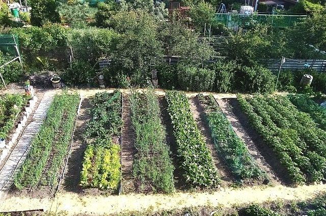Выбирая соседей для той или иной культуры, важно не допустить ошибку. Ведь высаженные в одном грунте растения соревнуются за солнечный свет, питательные вещества и влагу в почве, внимание опылителей.
