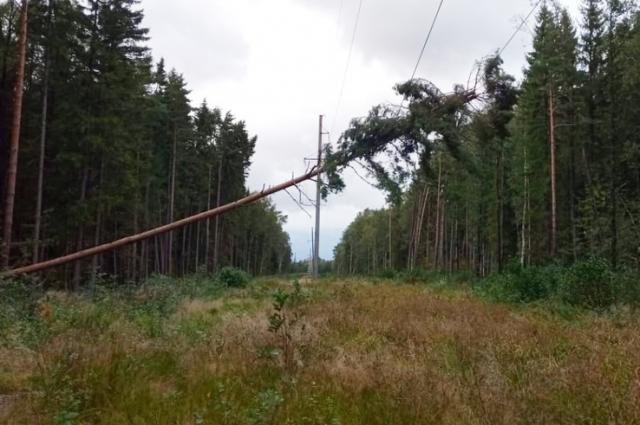 дорожные службы за ночь убрали с региональных трасс 136 поваленных деревьев.