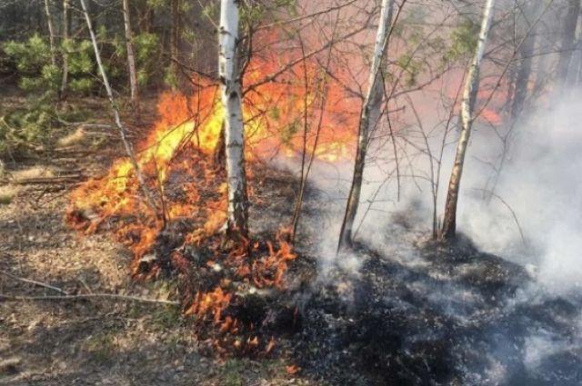 В трех регионах Украины объявлен чрезвычайный уровень пожарной опасности.