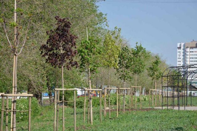 Деревья, высаженные в Оренбурге в прошлом году, успешно прижились.