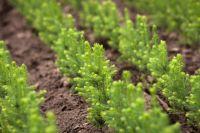 На посадку деревьев выделено 178 млн рублей.