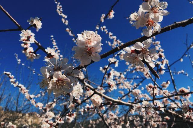 На улице все цветёт