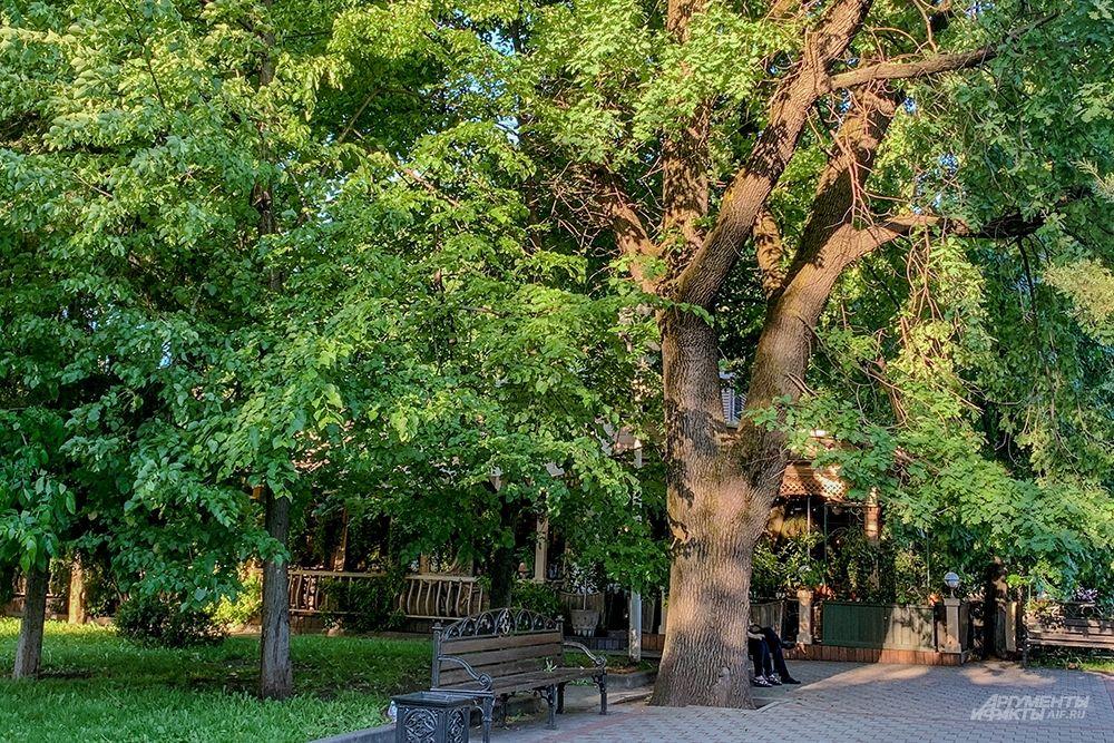 Старый дуб в сквере имени Жукова.