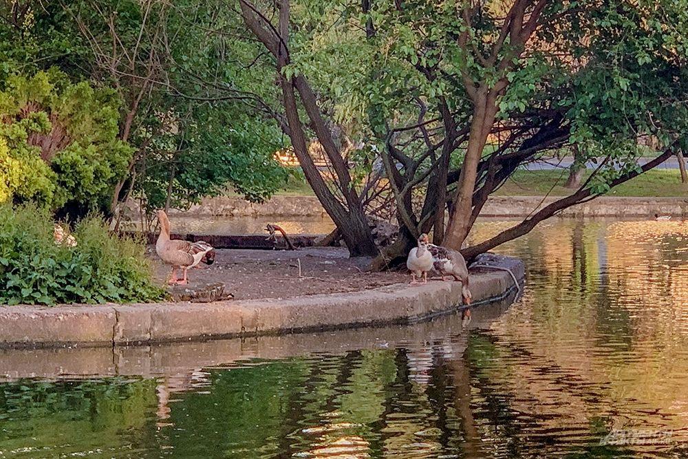 В центре пруда есть зеленая зона.