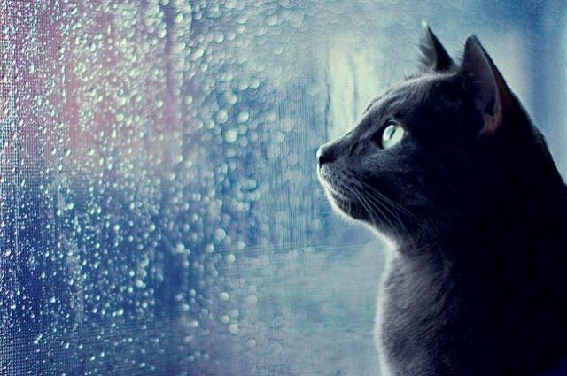 Прогноз погоды в Украине на 24 мая: ожидаются дожди с грозами.
