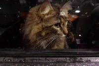 Кот застрял в оконной раме.