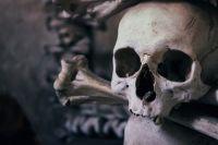 Черепа и кости: останки 3 человек найдены в поле в Увинском районе Удмуртии