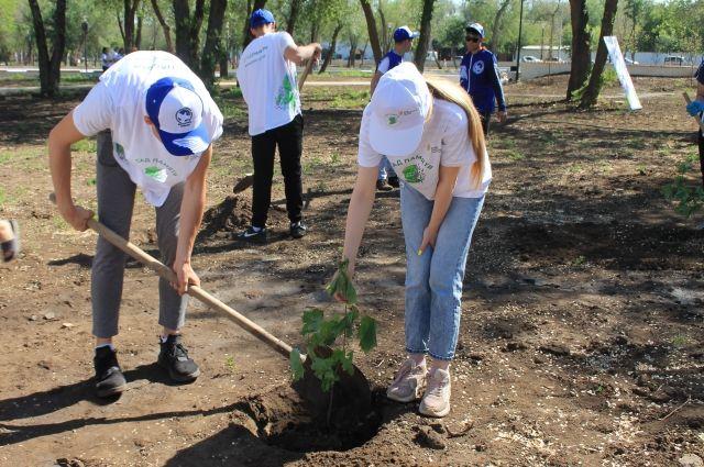 Оренбургские школьники высадили 40 деревьев в рамках акции «Сад памяти».