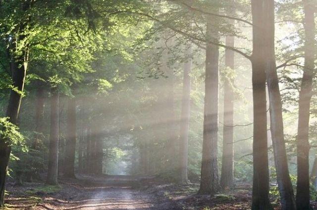 Нефтегазодобывающая компания причинила вред лесу на 22 млн рублей