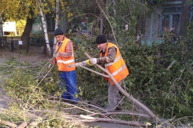 Сухие и аварийные деревья спиливают ежегодно.