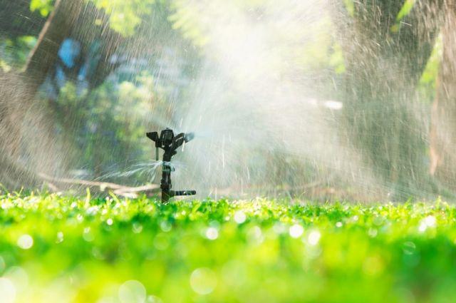 Искусственный дождь. Почему дождевание полезно для растений