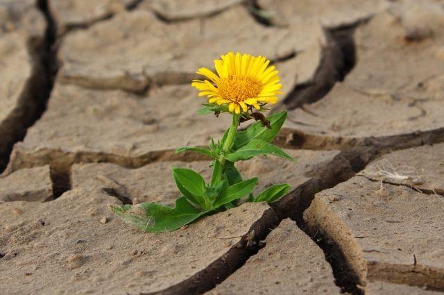 Из-за засухи аграрии Башкирии недополучат четверть урожая хлеба