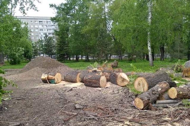 Вместо деревьев хотят сделать дорожки.