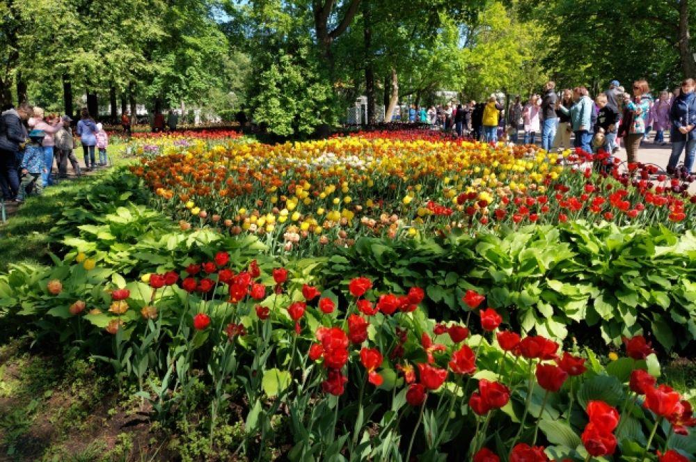 В Петербурге прошел фестиваль тюльпанов.