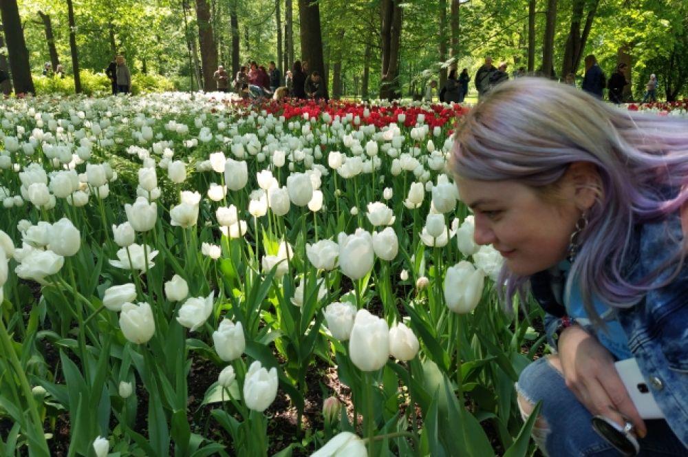 Больше всего в мире тюльпанов выращивается в Нидерландах.