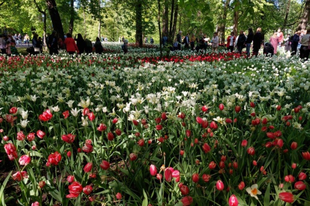 Фестиваль тюльпанов продолжался две недели.