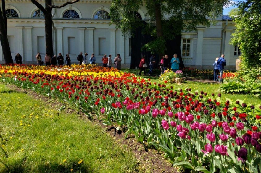 В мире существует больше 80 видов тюльпанов.