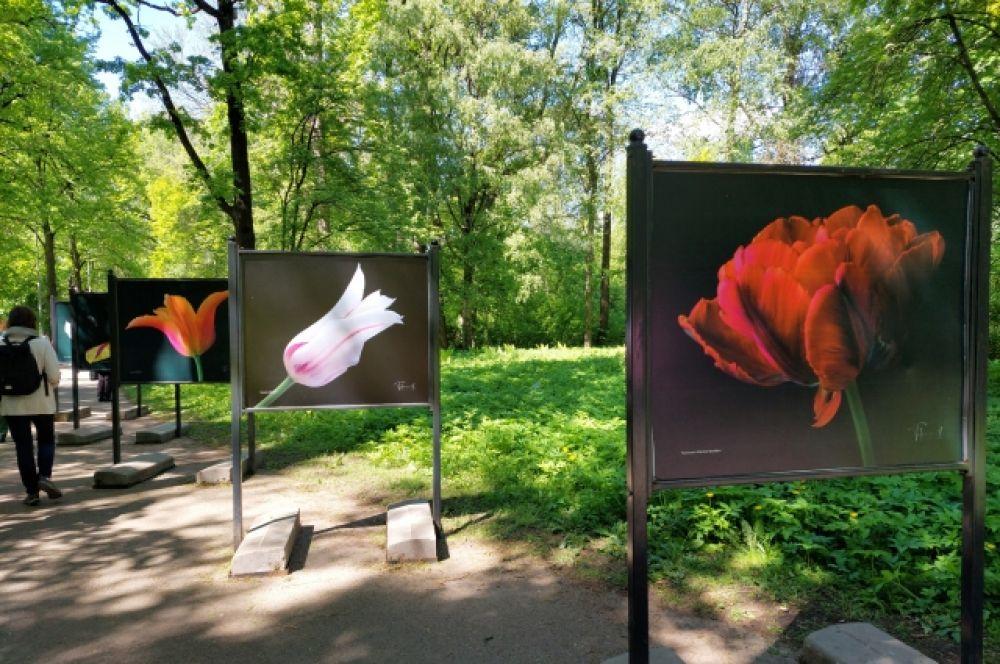 О каждом тюльпане на фестивале подробно рассказали.