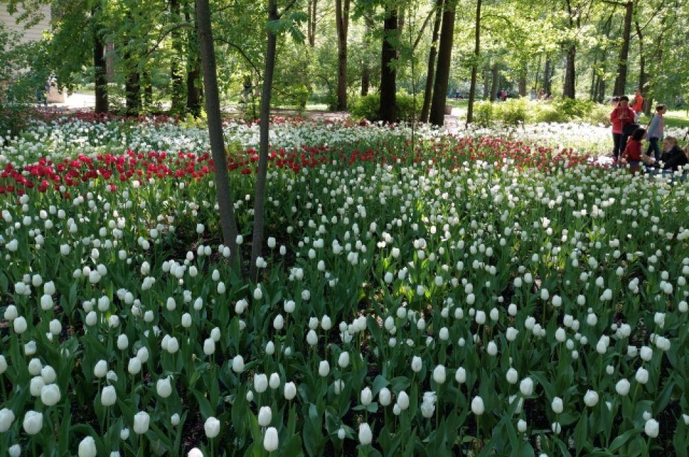 Первые тюльпаны появились на земле 15 млн лет назад.