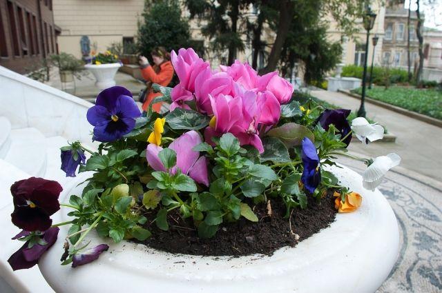 Традиционно в окружном центре садят растения наиболее устойчивых видов