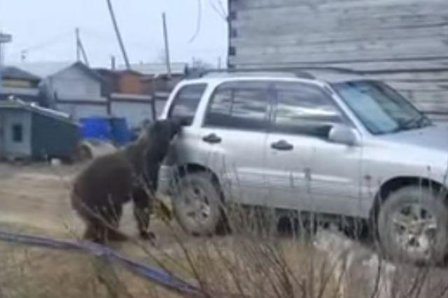 Медведь во дворе жилого дома