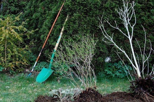 Яблони и другие зеленые насаждения украсят территории города