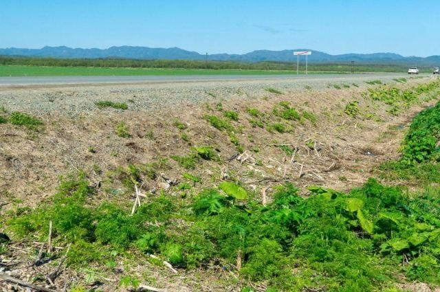 Так, после химической обработки, проведенной в 2020 году, участка трассы Южно-Сахалинск — Синегорск в этом году отмечается существенное уменьшение количества новых всходов сорняка.