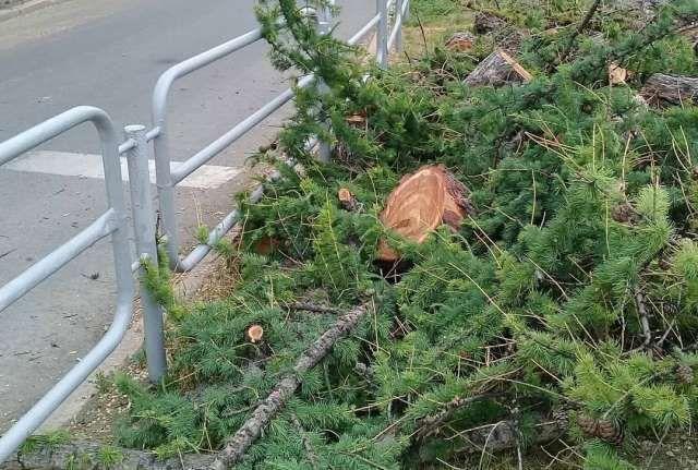 Погибло дерево, видевшее век челябинской истории.