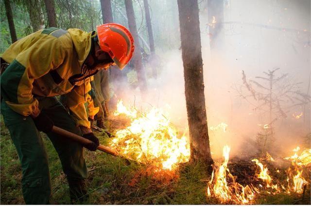 Борьбу с огнем ведут более 60 бойцов лесного спецназа.