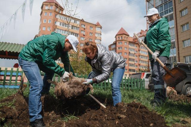 Высажено более 1300 саженцев деревьев и кустарников.