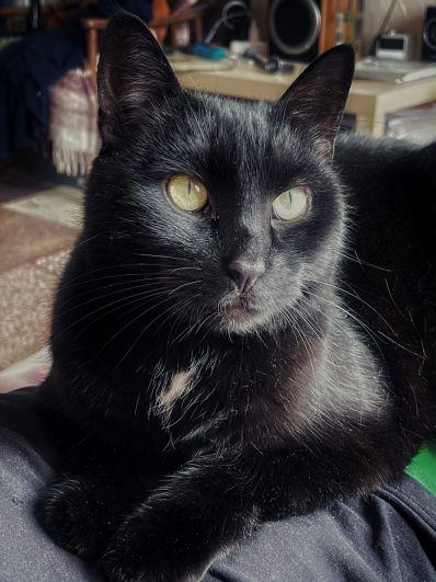 Феликс, 6 лет. Уверен, что это мы живем с ним, а не наоборот. Любвеобильный, ласковый и любопытный кот.