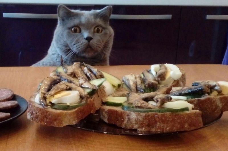 Василий Васильевич, 9 лет. Очень культурный кот. Шпроты любит, но раз нельзя, значит, нельзя. Пока хозяева рядом так точно.
