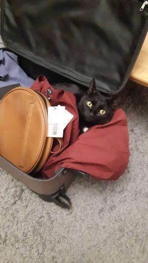 Ариэль, 4 года. Каждый раз думает, что едет в командировку со мной.
