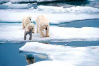 Лед в Арктике истончается быстрее, чем ожидалось, - ученые.