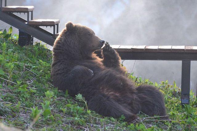Мишаками медведей называют только на Камчатке.