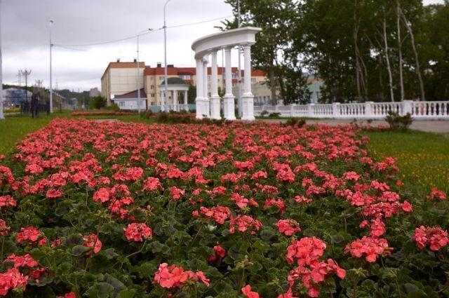 Нынешним летом город будут украшать бархатцы, гвоздики, герань, виола и др. – всего более 70 наименований.
