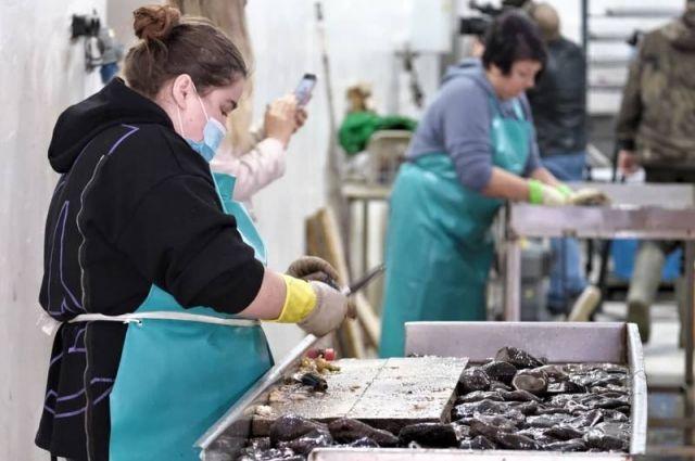 Свежевыловленный в Анивском заливе «морской огурец» попадает в цех, расположенный у береговой линии.