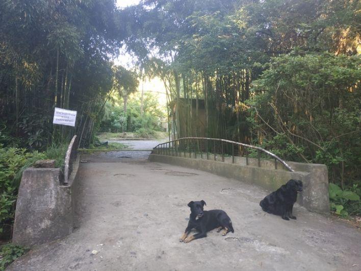В Ботаническом саду Сухума.