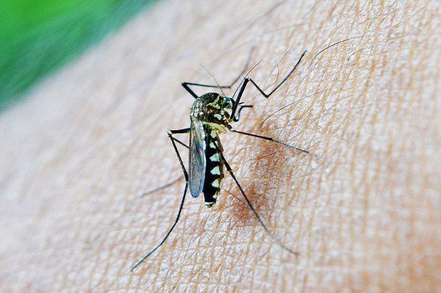 Опасные челюсти. Какие «секреты» насекомых помогут спастись от их укусов