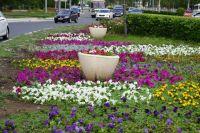 В Оренбурге будет высажено более миллиона корней цветочной рассады.