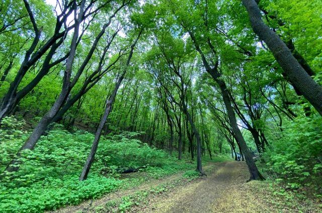Жителя Удмуртии насмерть придавило деревом в лесу