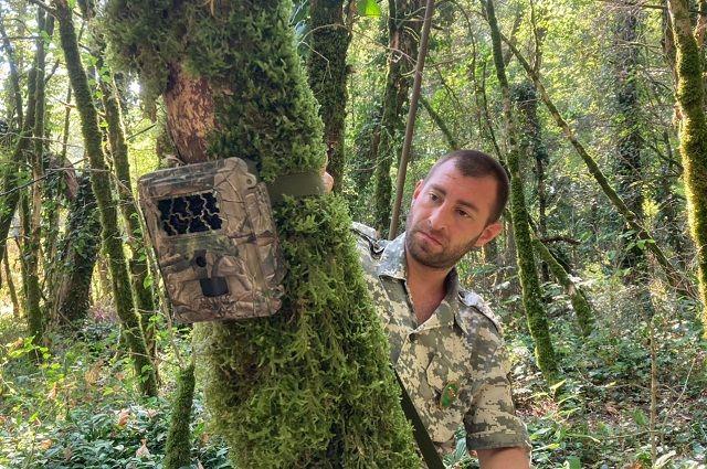 В лесах ставят фотоловушки для наблюдения за животными.