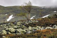 В хорошую погоду с Тулымского камня открываются живописные виды.