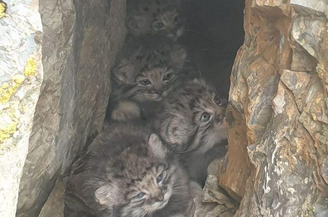 Четыре котенка поспешили спрятаться от постороннего внимания