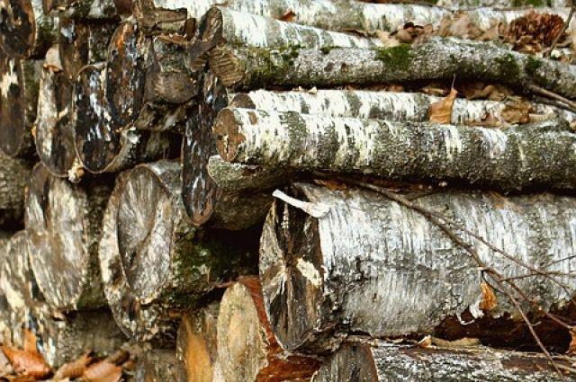 Экс-директор предприятия в Оренбуржье обвиняется в незаконной рубке 275 стволов деревьев.