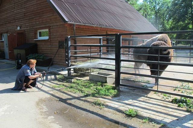 В зоопарке рассказали, когда лучше посещать животных в жару
